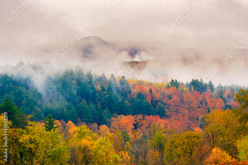Fotografie, Obraz  Maple trees on a hillside in Vermont during peak foliage season.