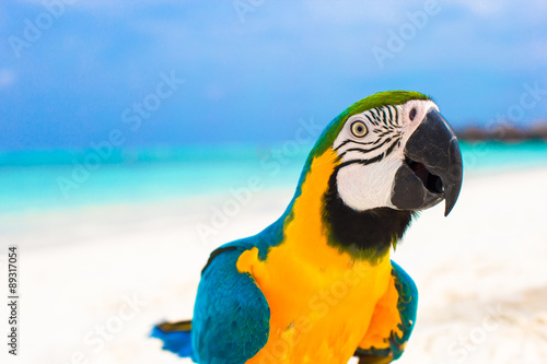 Foto op Canvas Papegaai Cute bright colorful parrot on the white sand in the Maldives