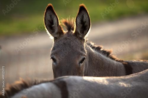 Photographie funny donkey