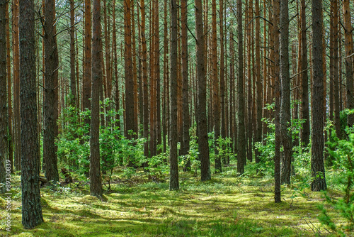 Foto op Canvas Bos nice forest