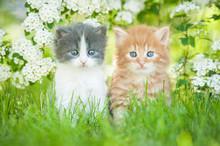 Two Little Kittens Sitting Near White Flowers