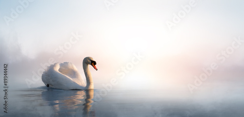 Fotobehang Zwaan Art beautiful landscape with a swan floating on the lake