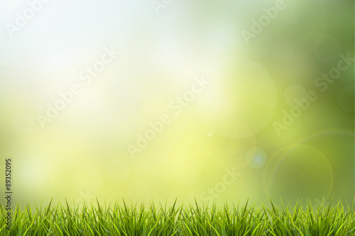 Fotobehang Gras Grass and green nature blurred background