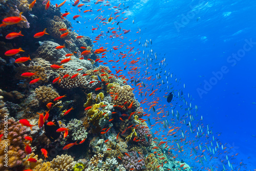 Photo Stands Coral reefs Underwater coral reef