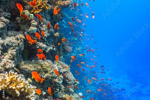 Staande foto Koraalriffen Underwater coral reef