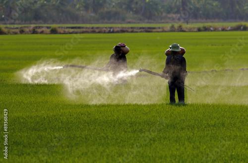 Fotografía  Farmer spraying pesticide in paddy field