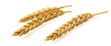Single Double Wheat Ears Isola...