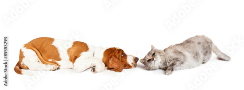 Poster Chien Dog And Cat Laying Facing Each Other