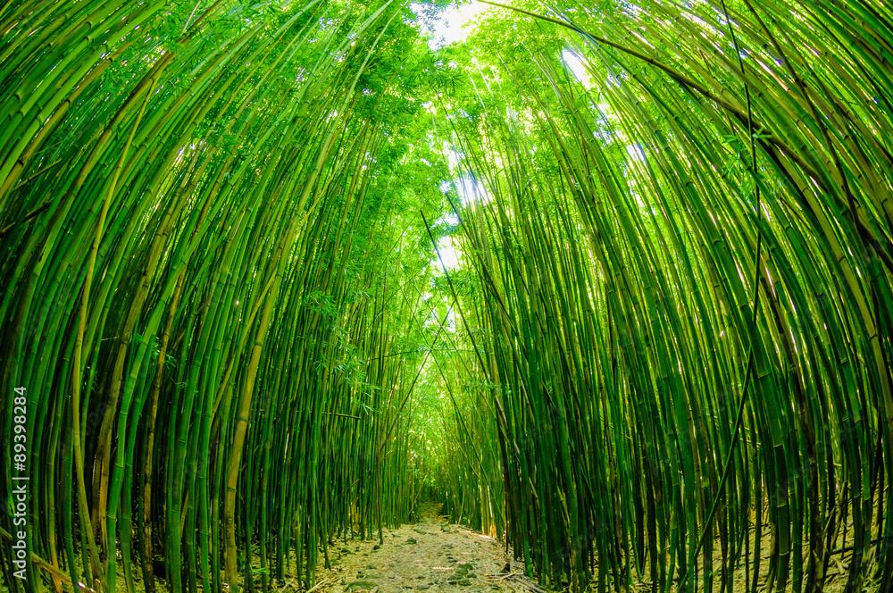 Pfad Durch Einen Bambuswald Auf Maui Hawaii Usa Foto Poster