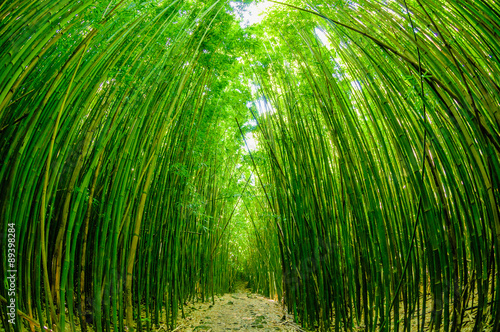 In de dag Bamboo Path through a bamboo forrest on Maui, Hawaii, USA