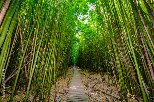 A wooden path through a dense bamboo forest, Maui, Hawaii, USA