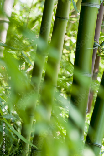 Papiers peints Bambou Close up of bamboo in a forest background