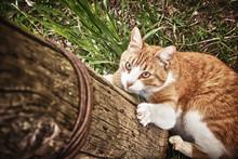 Cat Hunts.