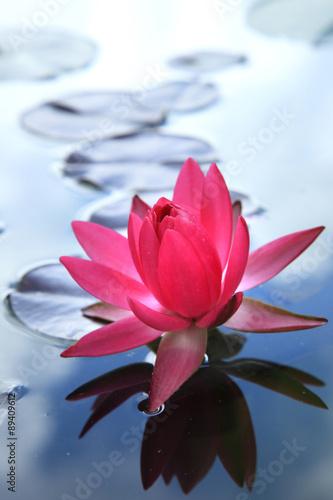 Staande foto Lotusbloem Beautiful pink thai lotus in lotus Pond