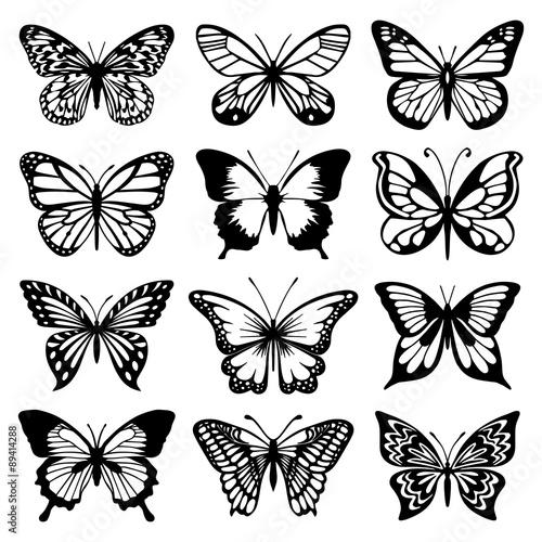 Butterfly Vector Set Wallpaper Mural