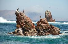 Resting Seabirds