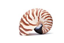 Nautillus Shell On White Background
