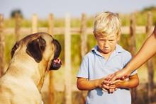 Little Boy And Large Dog