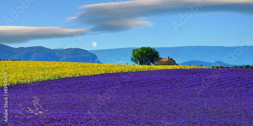 Spoed Foto op Canvas Violet Provence rural landscape