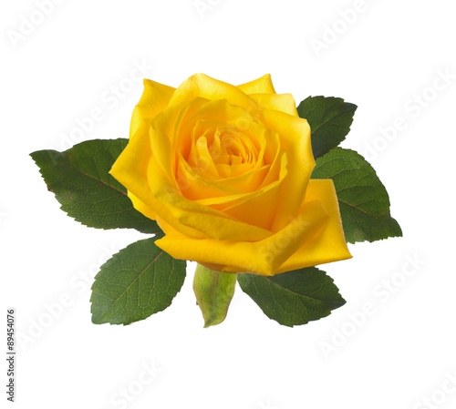 single beautiful  yellow rose #89454076
