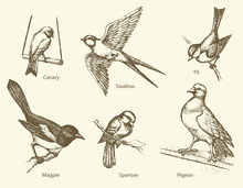 Vector Set Of Birds: Swallow, Sparrow, Magpie, Pigeon, Canary, T