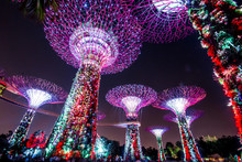 Supertree Singapore Park