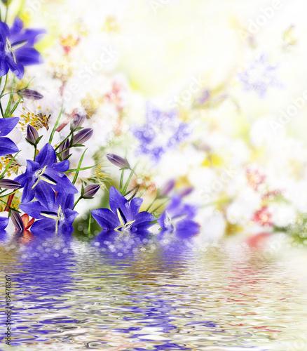 Foto auf Gartenposter Landschappen Flowering branch of apricot. blue bell