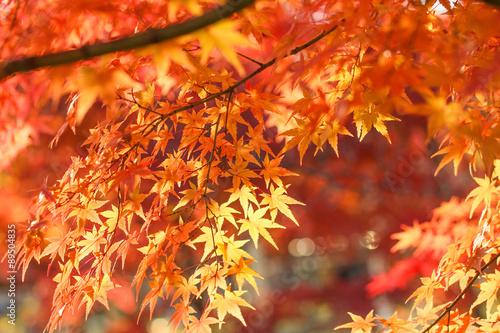Autumn leaves  - 89504835
