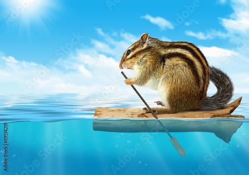 Fotografie, Obraz  Funny animal, chipmunk floating at ocean, travel concept