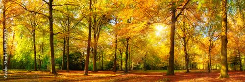 Herbst Wald Panorama im goldenen Sonnenschein