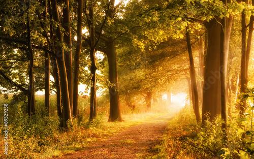 Fototapeta Malerischer Herbst lädt zum Wandern ein obraz