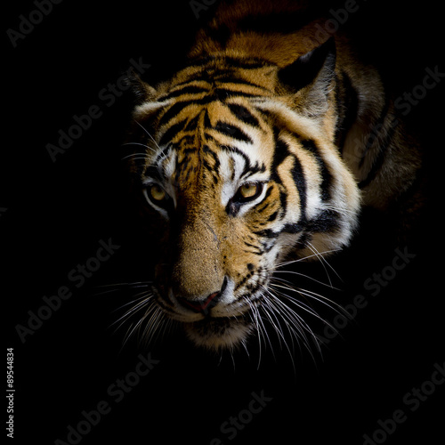 close up face tiger isolated on black background Canvas Print