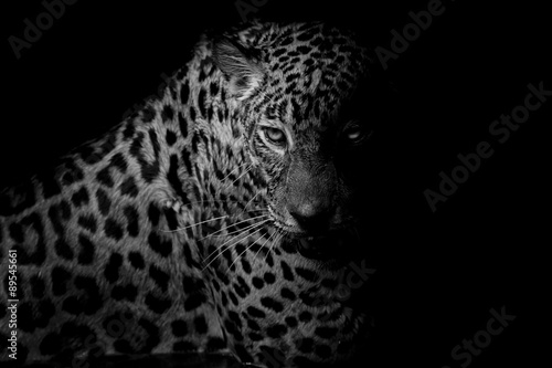 Poster Leopard black & white Leopard portrait isolate on black background
