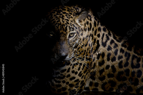 Poster Leopard Leopard portrait isolate on black background