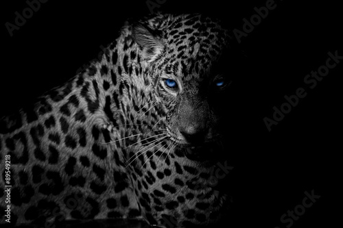Spoed Foto op Canvas Luipaard black & white Leopard portrait isolate on black background