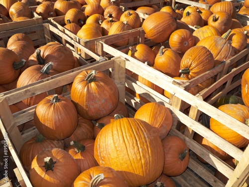Germany,Pumpkins in crates