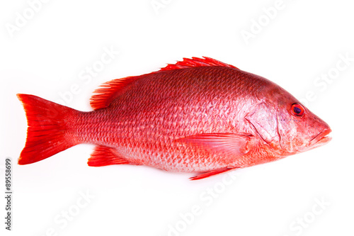 In de dag Vis Northern Red Snapper fish Lutjanus campechanusfish isolated on a white background.
