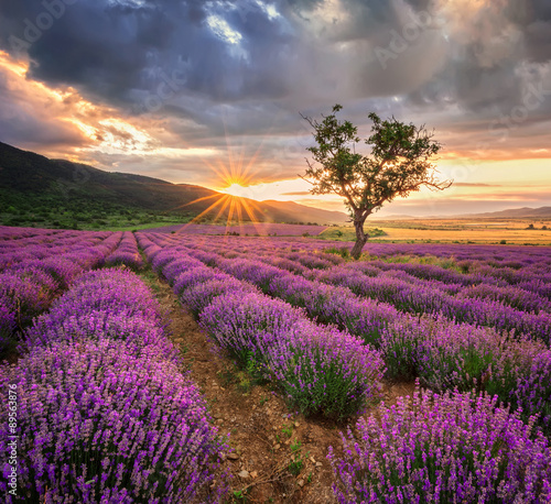 Aluminium Prints Salmon Stunning landscape with lavender field at sunrise