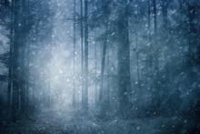 Dreamy Snowfall In Dark Blue C...