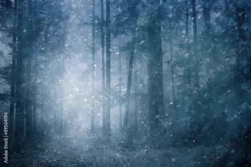 Fotografia Dreamy snowfall in dark blue colored foggy forest