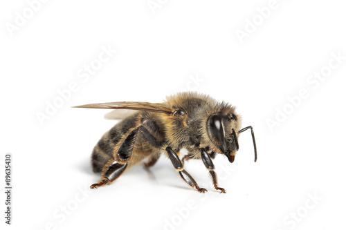In de dag Bee abeille