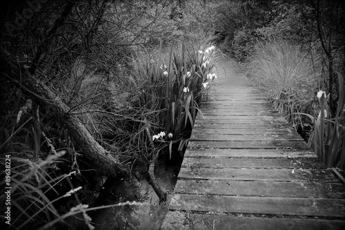 Photo  FOOTBRIDGE AT THE EDGE OF A LAKE