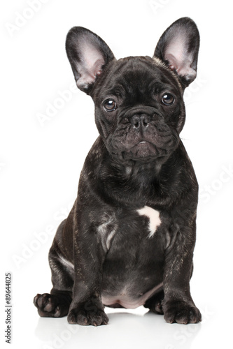 Foto op Plexiglas Franse bulldog French bulldog in front of white background