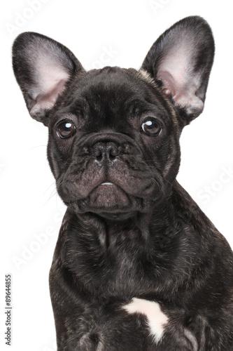 Tuinposter Franse bulldog Close-up of French bulldog