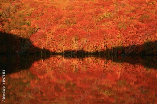 Foto op Aluminium Koraal 青森県 八甲田 紅葉の蔦沼