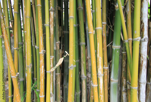 Papiers peints Bambou Bamboo sprouts