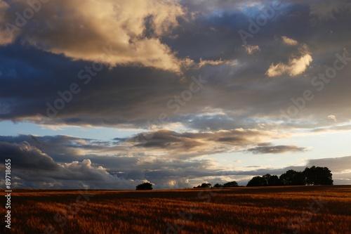 Poster Bleu nuit Cotswolds Barley Field & Sunset