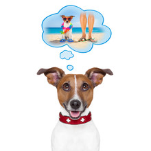 Summer Vacation Dog In A Speech Bubble