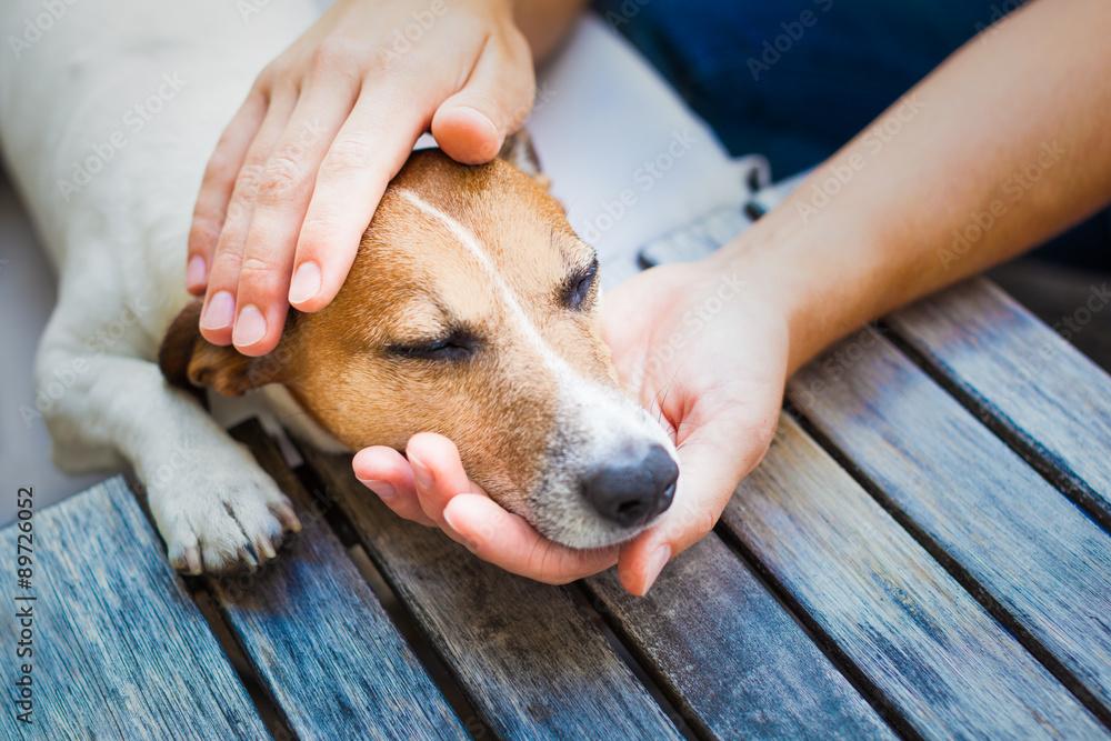 was genau ist petting