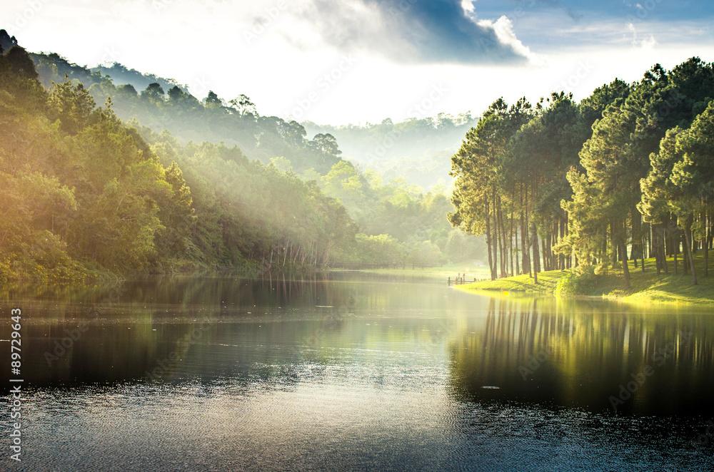 Fototapeta pang ung , reflection of pine tree in a lake